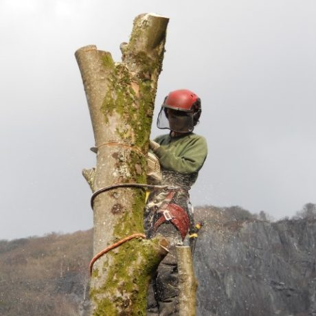 forestry-contracting-association-3-1